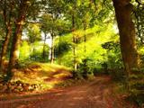 منظره جنگل تابستانی