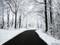 جاده جنگلی در زمستان