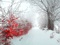 منظره رویایی برف زمستانی