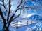 صحنه زمستانی درخت