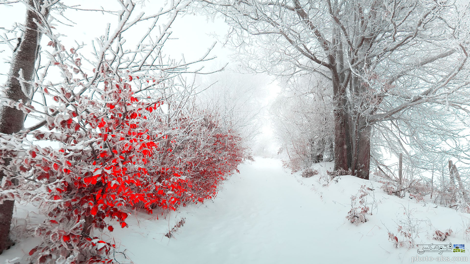 http://pic.photo-aks.com/photo/nature/season/winter/large/beautiful-nature-winter.jpg