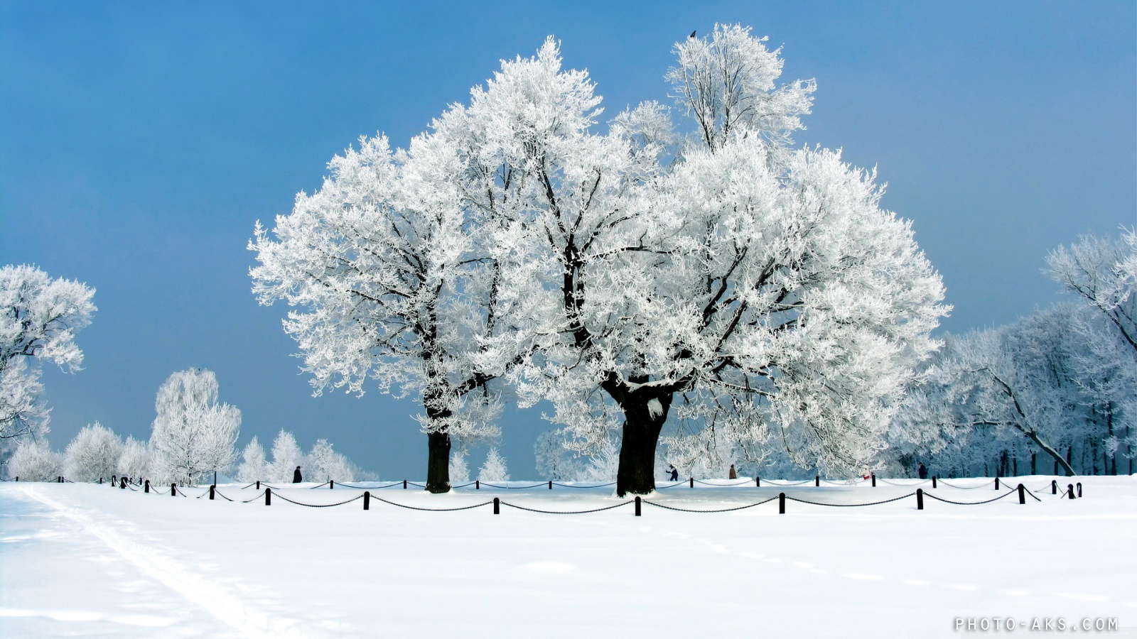 http://pic.photo-aks.com/photo/nature/season/winter/large/winter-wallpaper-photo-aks.jpg