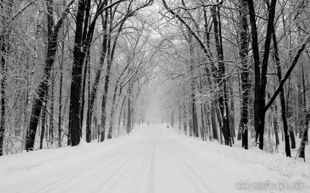 جاده برفی Snowy Road