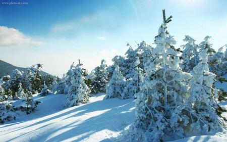 طبیعت زمستان و برف nature of winter