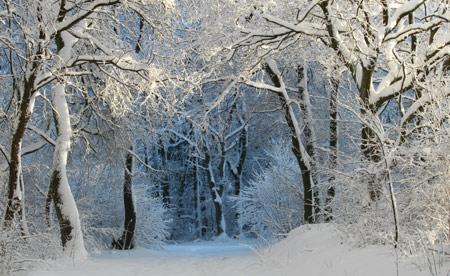 منظره زیبا جنگل پوشیده از برف tree snow winter wallpaper