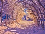 برف روی شاخ و برگ درختان