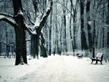 عکس زمستانی برفی پارک جنگلی
