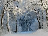 منظره زیبا جنگل پوشیده از برف