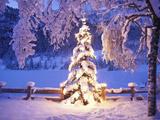 عکس درخت کریسمس نورانی