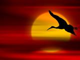 عکس پرواز پرنده در غروب