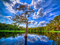 منظره درخت و دریاچه