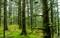 عکس جنگل سر سبز شمال