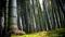 عکس درختان بامبو