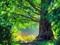 درخت زیبا و سبز کهنسال