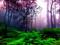 منظره رویایی و زیبای جنگل