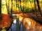 جنگل پائیز رودخانه