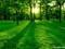 پارک جنگلی زیبا