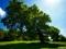 عکس درخت سبز و زیبا