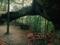 منظره بکر طبیعت جنگل
