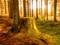 طبیعت جنگل زیبا