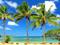 درخت خرما در ساحل