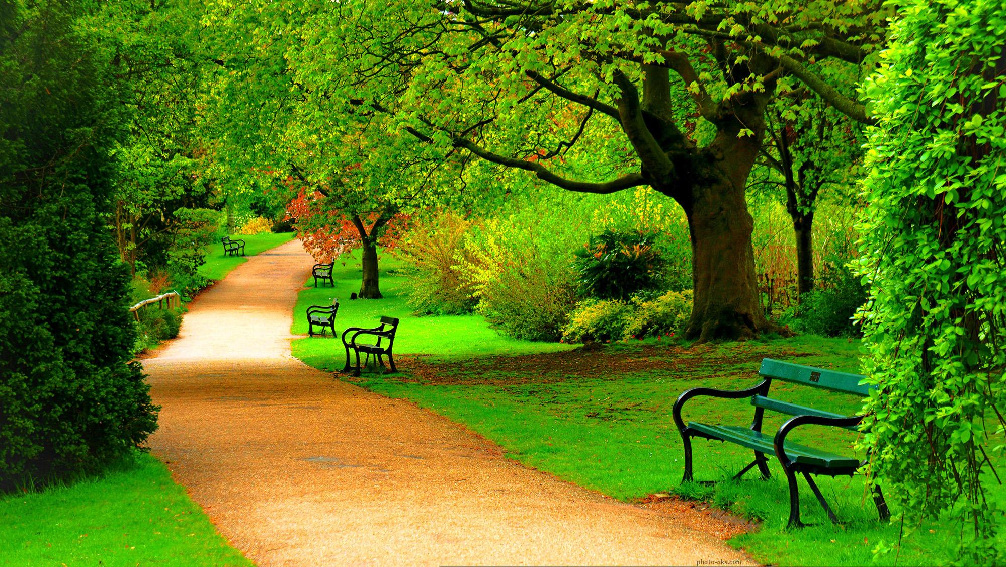 عکس منظره درختان