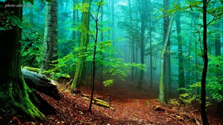 مه در جنگل آمازون fog in forest