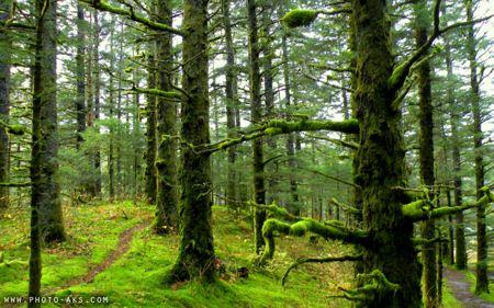 عکس جنگل سر سبز شمال green forest picture