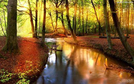 جنگل پائیز رودخانه river in forest