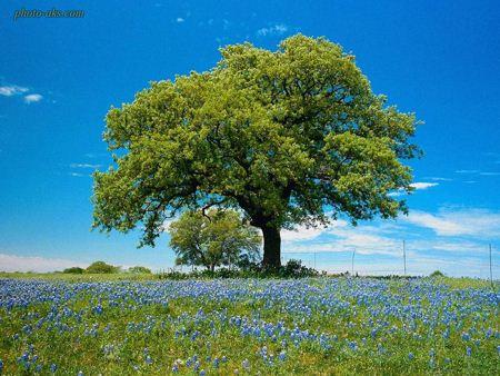 تک درخت سبز green tree