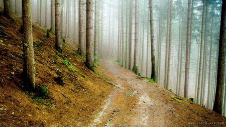 جاده خاکی در جنگل jungle inside tree photo aks