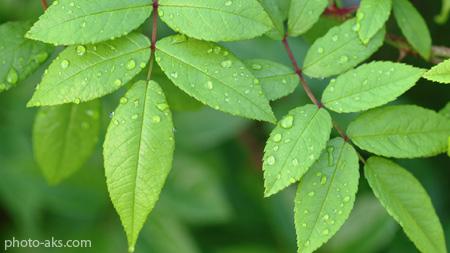 برگ درختان سبز green leaves wallpaper