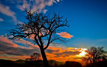 منظره درخت و غروب خورشید sunset tree sky