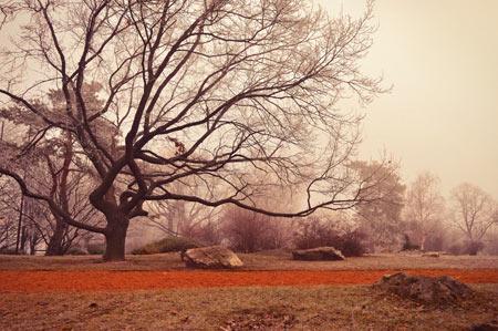 عکس منظره زیبا درخت خشکیده tree autumn wallpaper