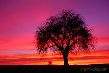 عکس تک درخت زیبا در طلوع tree sunrises picture
