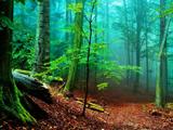 مه در جنگل آمازون