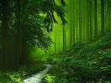 عکس طبیعت سرسبز جنگل