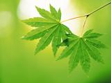 عکس برگ سبز روی شاخه درخت