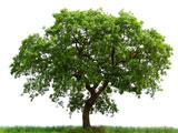 عکس تک درخت زیبا