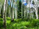 جنگل کوهستانی