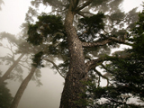 درختان سربه فلک کشیده جنگلی