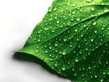 عکس برگ سبز با قطرات آب