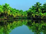 منظره سبز رودخانه و جنگل استوایی