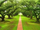 پارک جنگلی سرسبز