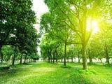 منظره درختان سرسبز و نور خورشید