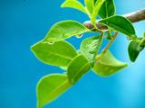 برگ سبز درخت و آسمان آبی