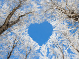 عکس قلب شاخه درختان در زمستان