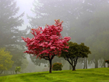 منظره درخت در جنگل مه آلود