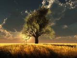 عکس تک درخت در غروب خورشید