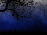 شاخه درخت در آسمان شب